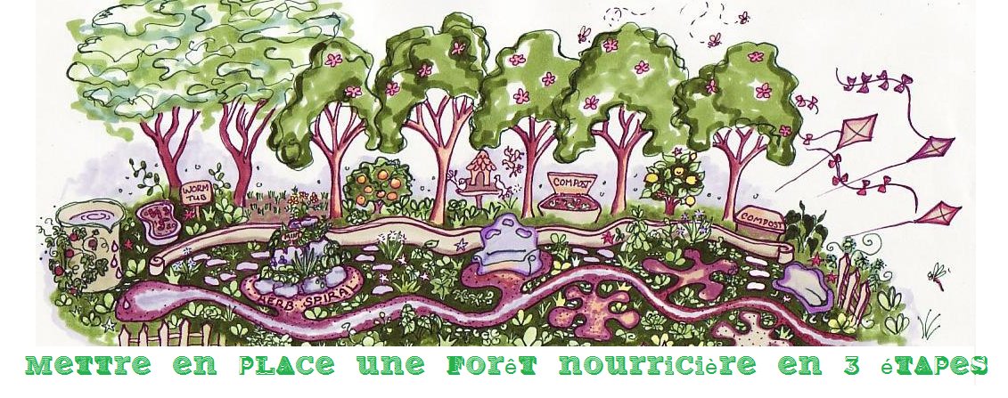 3 grandes étapes pour mettre en place une forêt nourricière