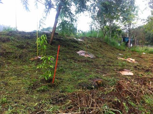 image forêt nouricière 2
