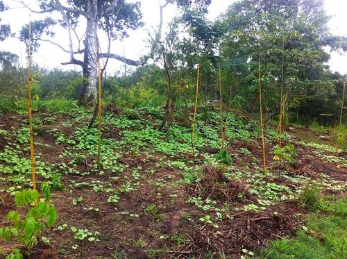 image forêt nouricière 3