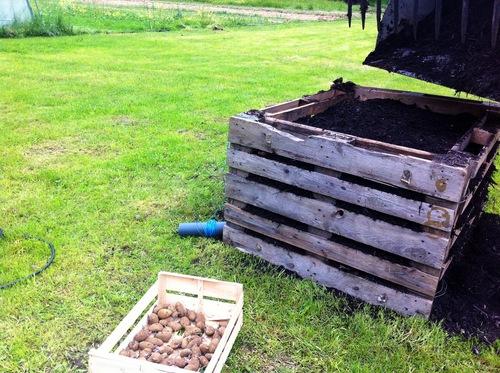 pommes de terre 3